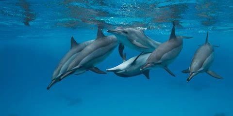 dauphins pic1